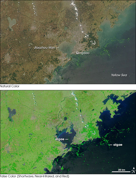 MODIS comparison of algal bloom