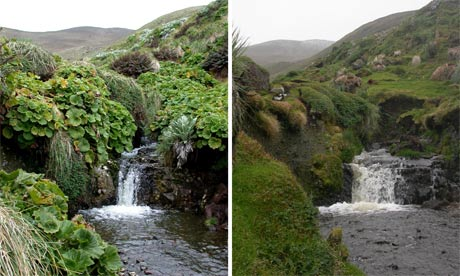 Finch Creek on sub-Antartic Macquarie Island. Rabbits have stripped 40% of the island bare of vegetation, scientists say. Photograph: /Australian Antarctic Division