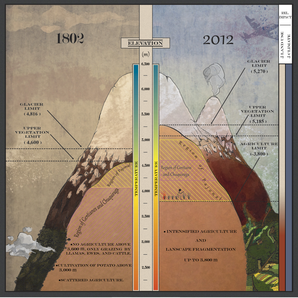 An update of Humboldt's Tableau. Shown is a summary of major changes in overall vegetation limit, average glacier limit, and shifts in topmost vegetation regions on Chimborazo from 1802 to 2012. The major drivers of change, climate, and land use change are represented by the bars to the right: a constant impact of climate change—in particular, increased temperature—the stronger relative impact of land use at the lower sites, mainly through in- tensified agriculture, and the effect of grass harvesting and local burning. Illustration of glaciers is approximate.